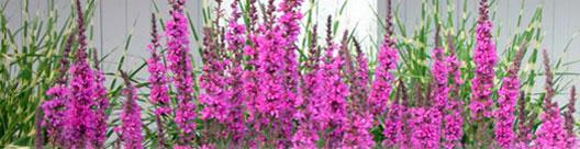 top-pink-flowers.jpg